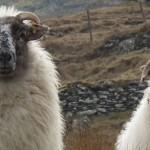 Ireland-Renvyle-Connemara