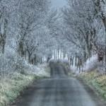 Tarlton-Lane