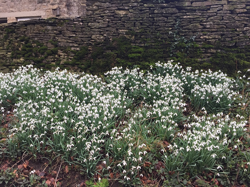 More snowdrops in Chavenage