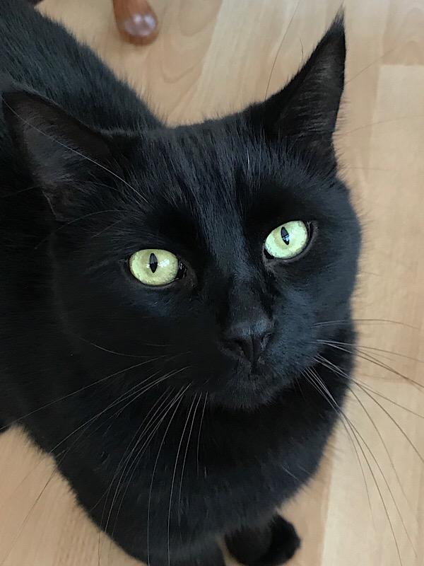 This is Jasper      my very wonderful cat ! - Rob Little's Blog